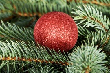 One christmas ball over tree.