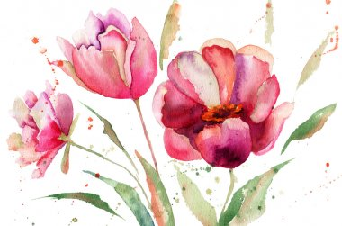 Three Tulips flowers