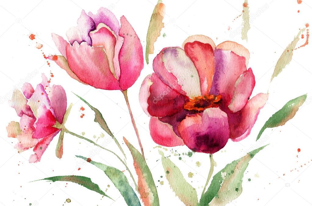 Three Tulips flowers