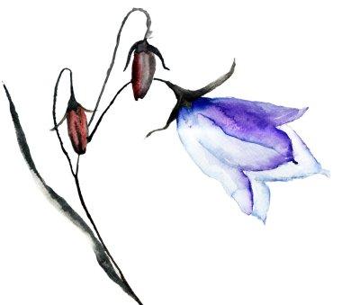 Bell flower, watercolor illustration stock vector