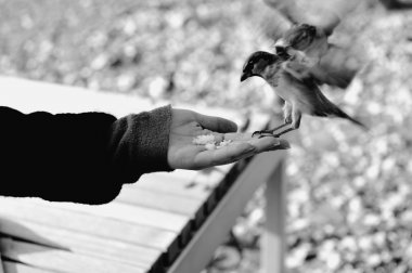 Feeding the birds, seed in hand