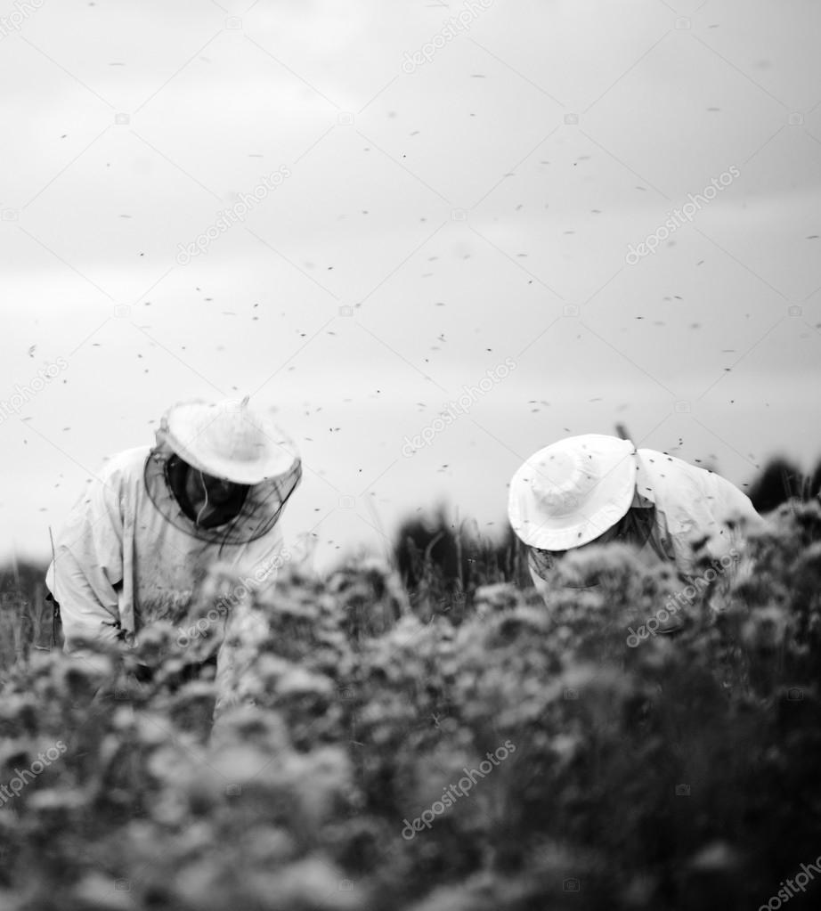 Beekeepers working on the field