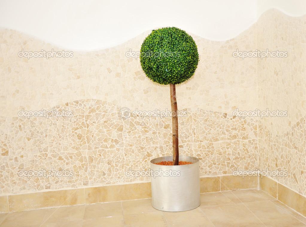 petite boule de plante arbre d 39 int rieur photographie zurijeta 26227663. Black Bedroom Furniture Sets. Home Design Ideas