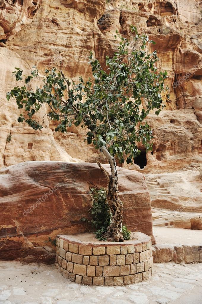 The Siq - ancient canyon in Petra, Jordan