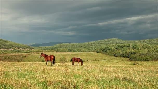 koně se pasou v pastvinách