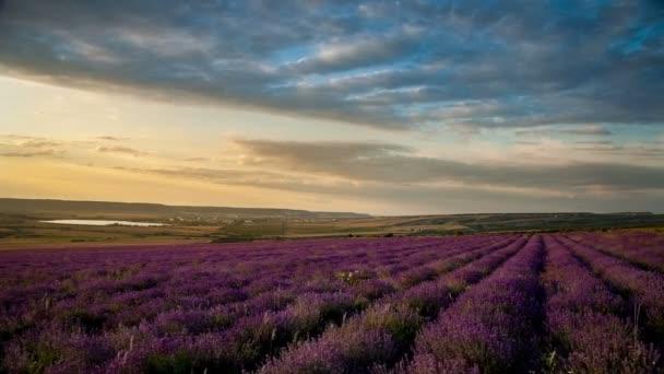 Wolken über Lavendel Blumen