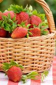 jahody v koši