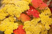 Fotografie oranžové květy