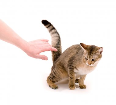 Hand stroking the cat