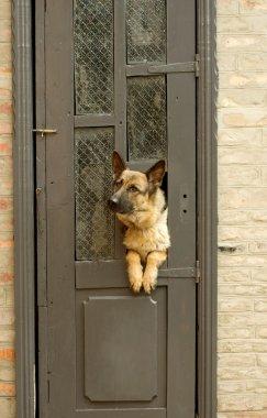 dog and home.