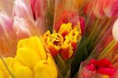 Fotografie Bunch of tulips