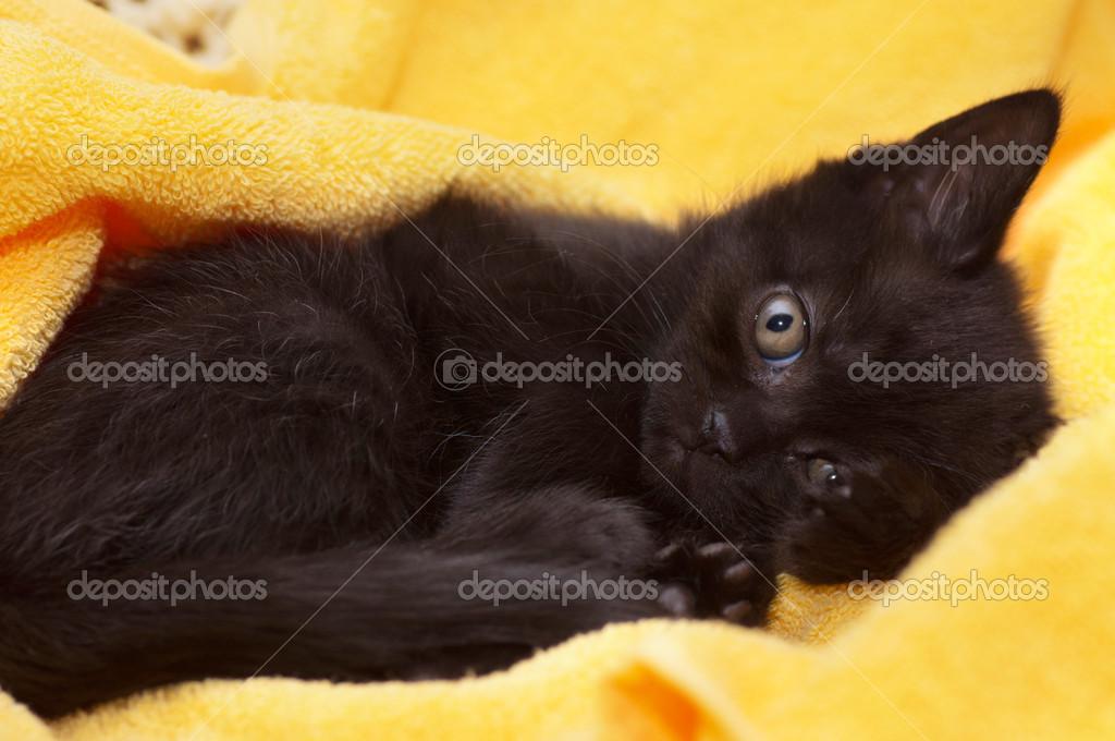 mokré mladé černé kočička mladí stříkat porno
