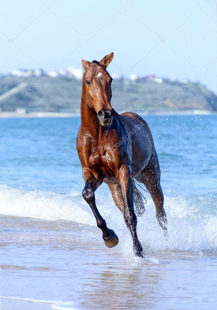 Cavallo in acqua foto stock dozornaya 24962015 for Sfondi cavalli gratis