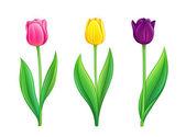 Fényképek Tulipánok - eps10 vektor illusztráció