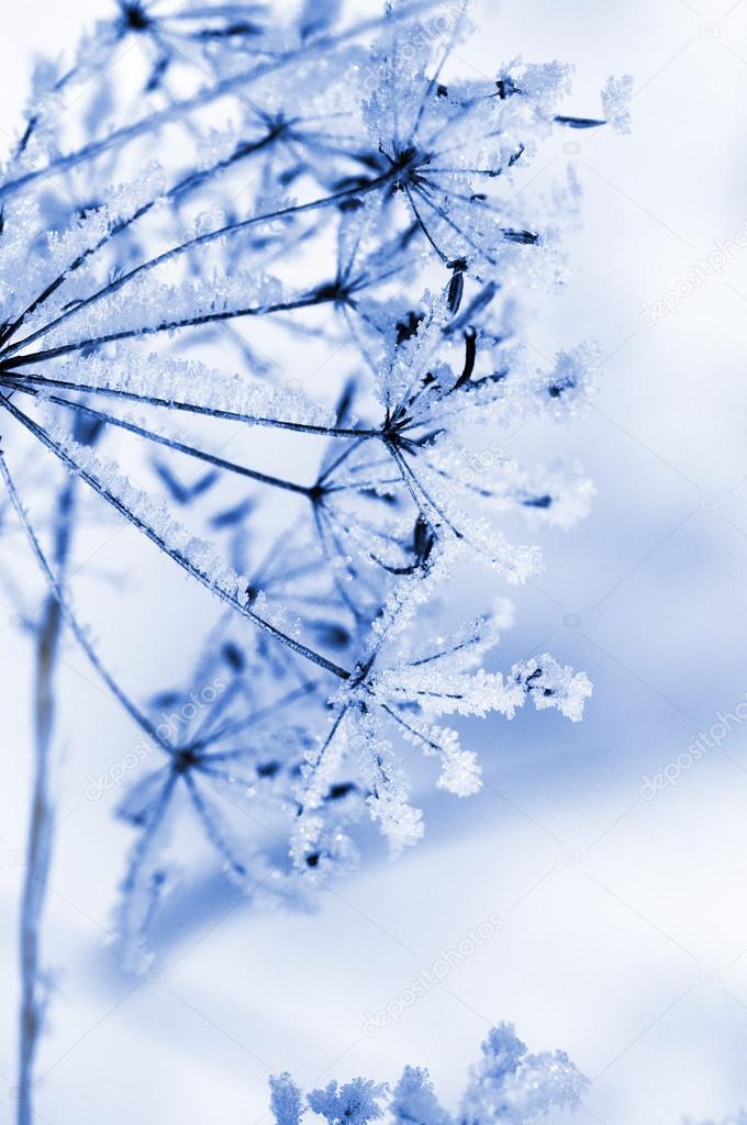 Winter floral background