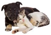 Welpe und Katze