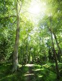 Fotografie footpat mezi stromy v zeleném lese