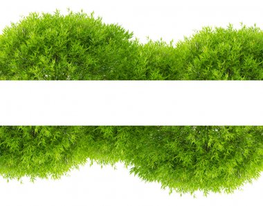 Green tree foliage band isolated on white background stock vector