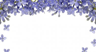 blue lilac flower frame