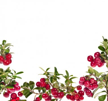red cowberries half frame isolated on white