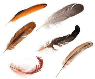 set of six color feathers