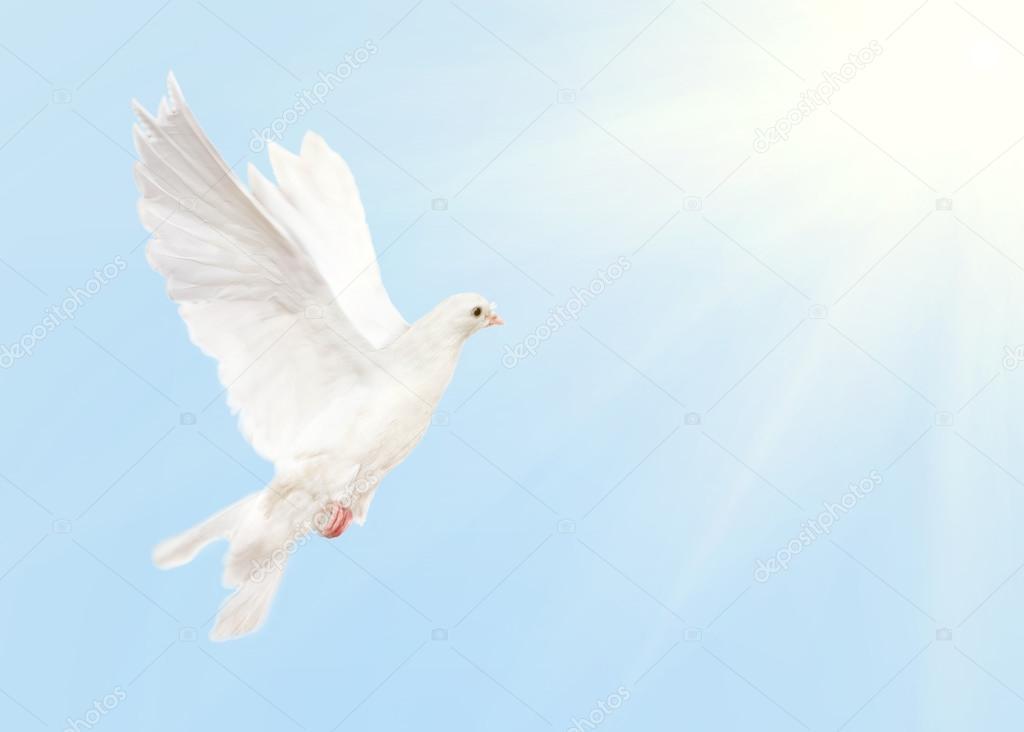 Imágenes Una Paloma Volando Paloma Blanca Volando En El Cielo