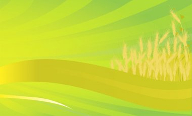 golden wheat on green background