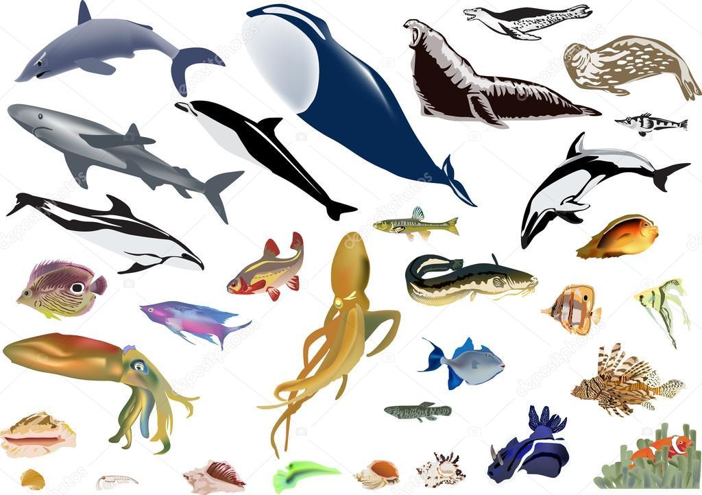 Dibujos: ilustraciones animales marinos | gran cantidad de animales ...