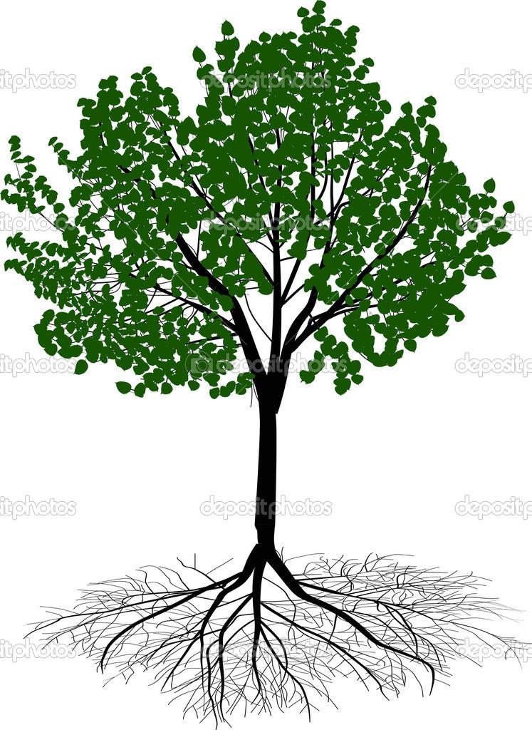 Arbre Avec Racine arbre feuillus vert avec racine — image vectorielle dr.pas © #24183493