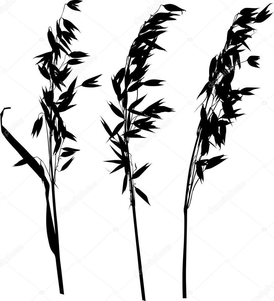 Stock Vector Dr Pas 6261329: Three Oat Ears Silhouettes On White