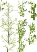 Fényképek elszigetelt zöld bambusz kollekció