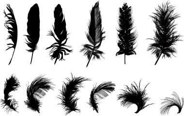 Illustration with twelve black feathers isolated on white background stock vector