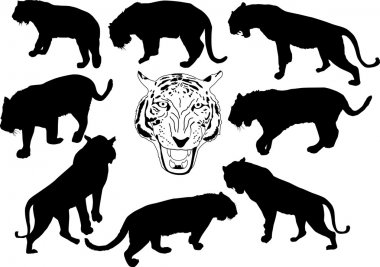 set of isolated tiger silhouettes