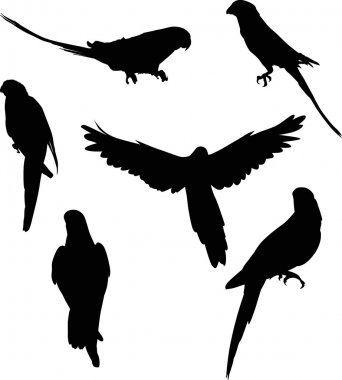 six parrot silhouettes collection
