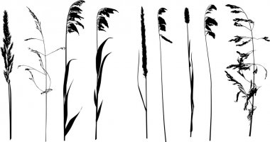 nine wild plants silhouette isolated on white