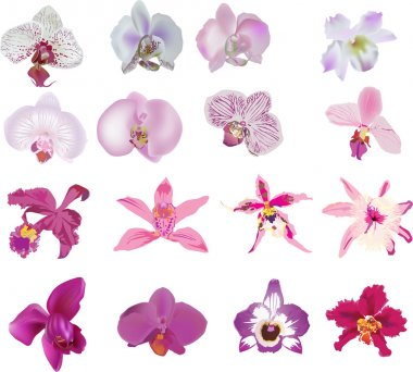 set of sixteen isolated pink orchids