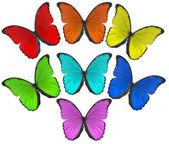 Rainbow színes pillangók illusztráció