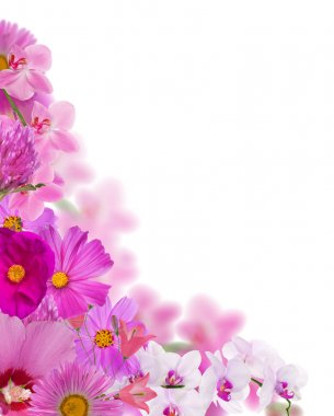 bright pink flowers corner isolated on white