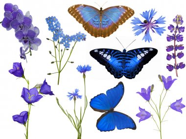 set of blue flowers and butterflies isolated on white