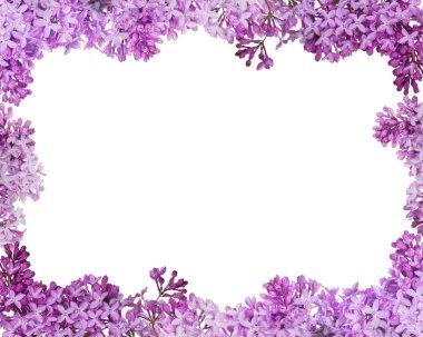 lush lilac flower frame on white
