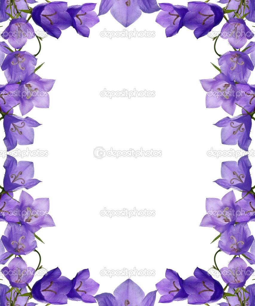 para marcos de flores azules campanula aislado en blanco — Foto de ...
