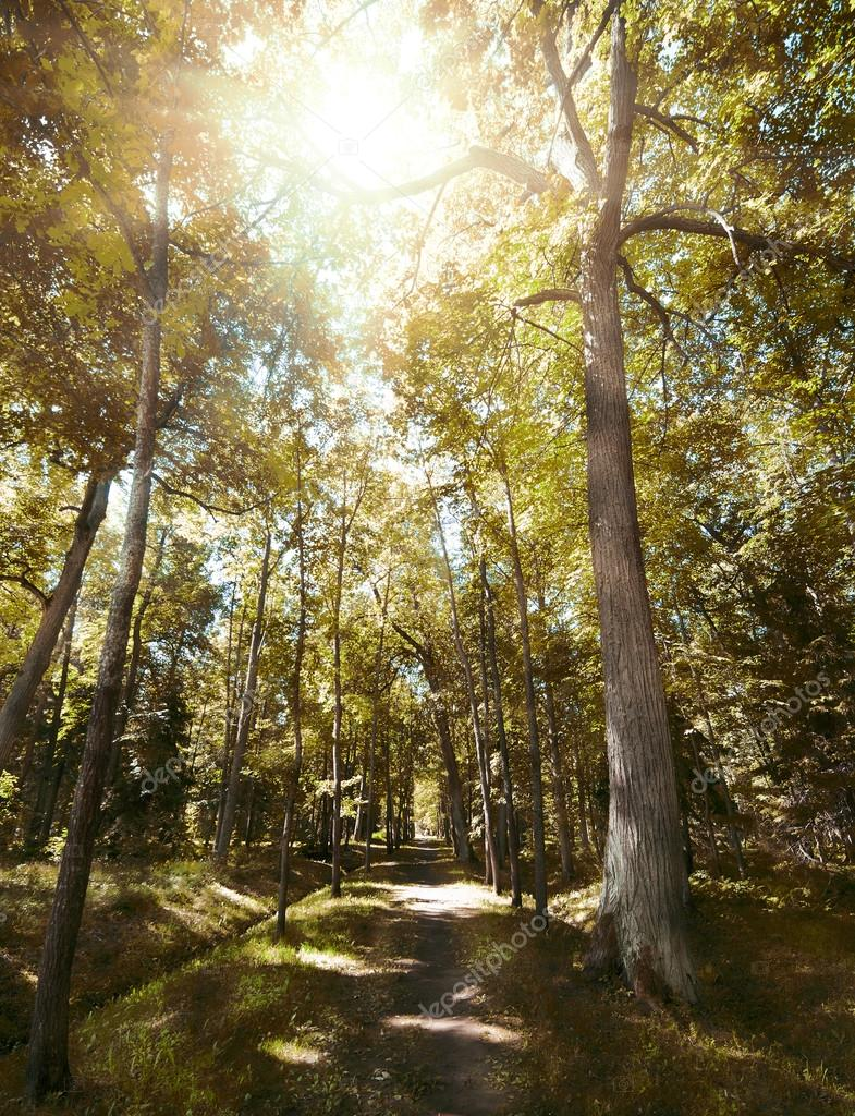 Фотообои Footpat between trees in autumn forest