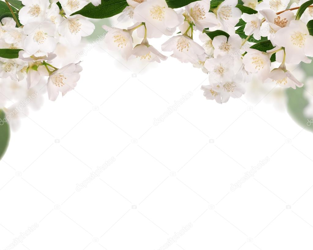 Half frame from pure jasmine flowers isolated on white stock photo half frame from pure jasmine flowers isolated on white stock photo izmirmasajfo Gallery