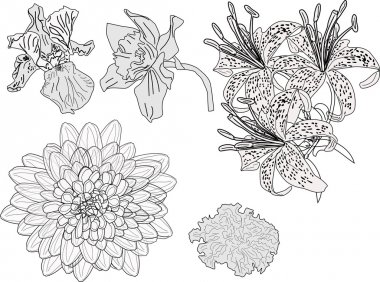 five garden flowers sketches isolated on white