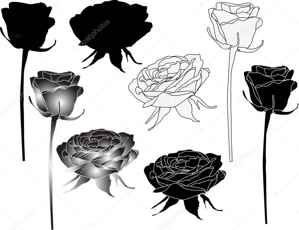 Dibujos Rosas Negras Bocetos De Rosas Blancas Y Negras Aisladas