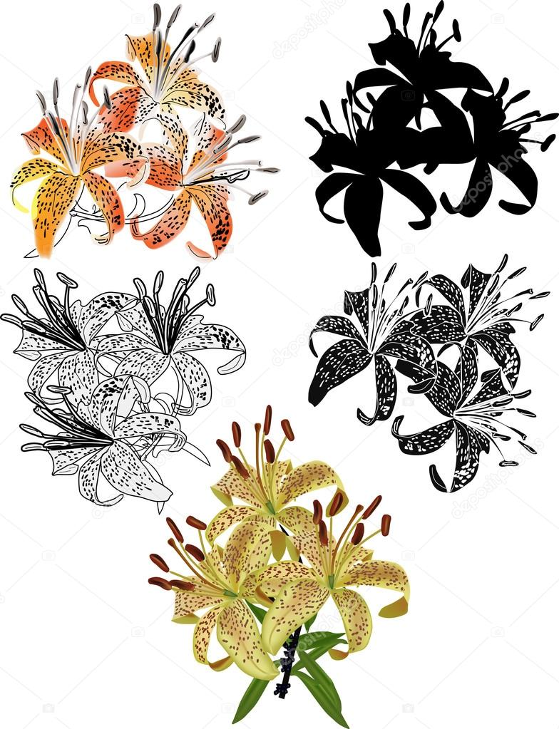 Set of different styles lily flowers isolated on white stock set of different styles lily flowers isolated on white stock vector izmirmasajfo