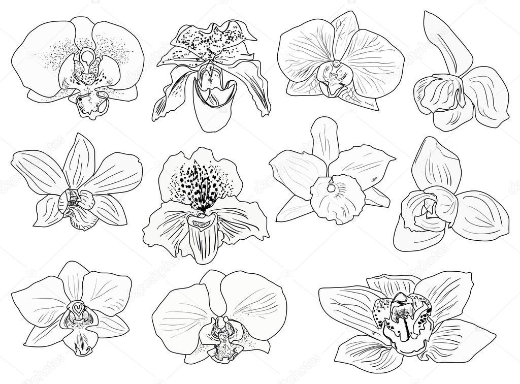 Eleven Black Orchid Flowers Sketches Stock Vector C Dr Pas 36752807