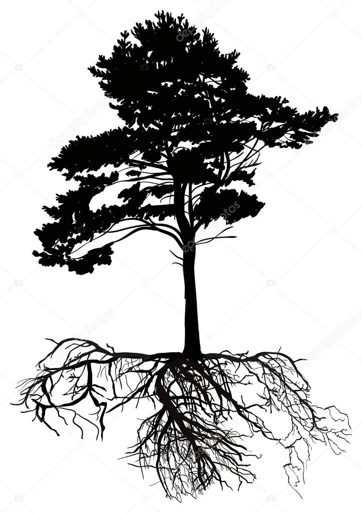Isolated Black Pine Tree With Large Root Stock Vector