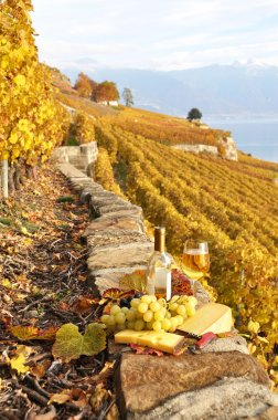 Glass of white wine and chesse on the terrace vineyard in Lavaux