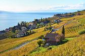 szőlőültetvények Lavaux régióban, Svájcban